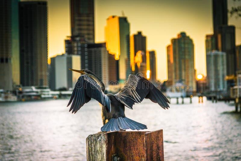 Oiseau de Darter sur la souche dans le port image stock