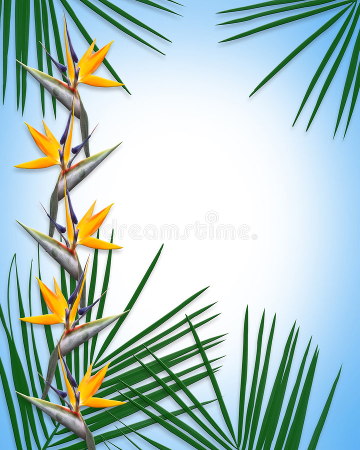 Oiseau de descripteur de Luau de paradis illustration de vecteur