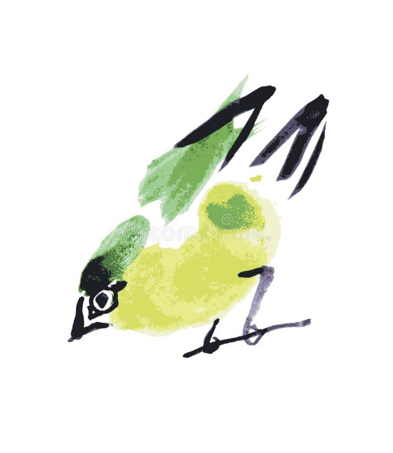Oiseau de dessin d'aquarelle, merle au fond blanc illustration de vecteur