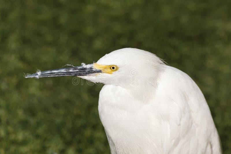 Oiseau de héron de Milou photo stock