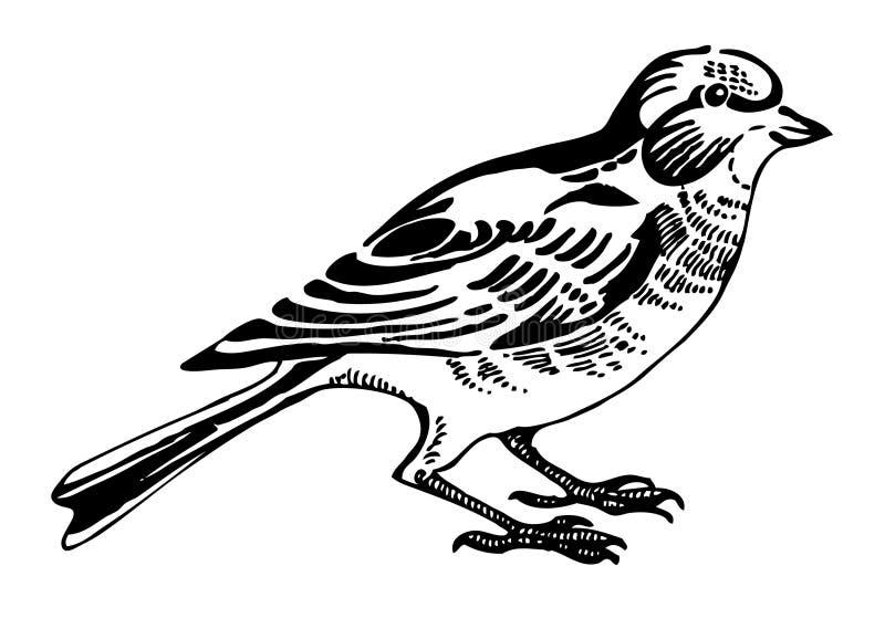 Oiseau de Linnet illustration libre de droits