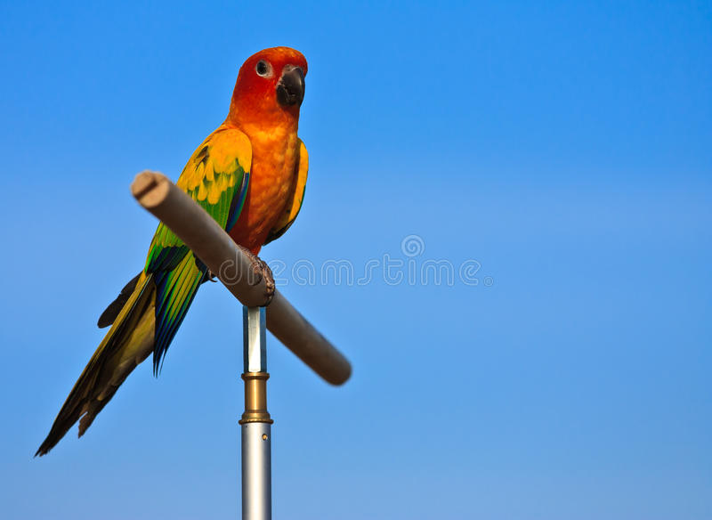 Oiseau de Macaw image stock