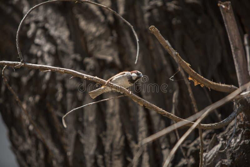Oiseau de moineau de Brown un temps d'automne d'arbre image stock