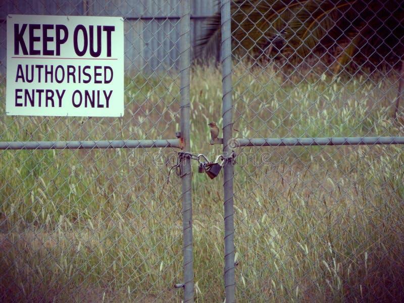 Oiseau de montre photos libres de droits