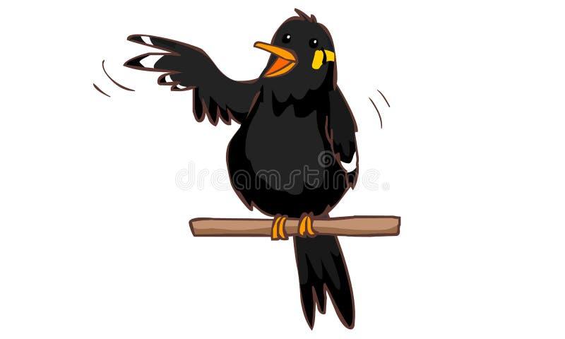 Oiseau de myna bavard de colline illustration libre de droits