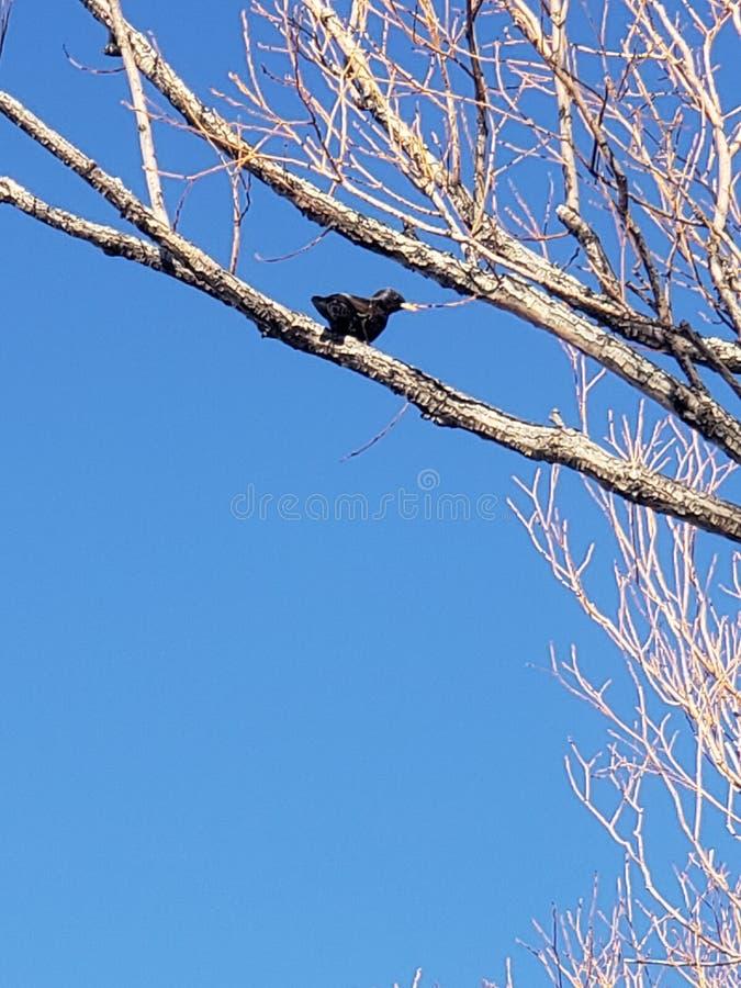 Oiseau de noir de midi photographie stock libre de droits