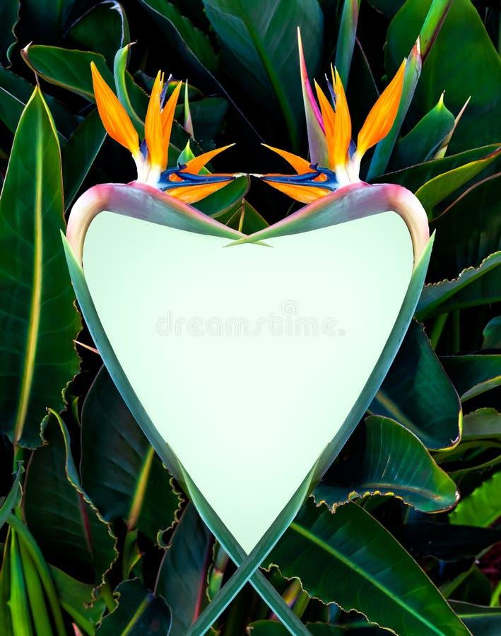 Oiseau de paradis en forme de coeur images stock