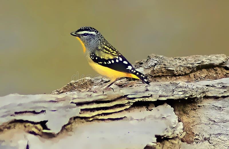 Oiseau de Pardalote illustration libre de droits