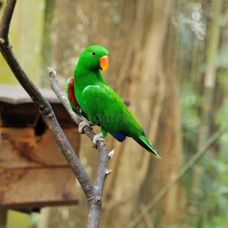 Oiseau de perroquet images libres de droits