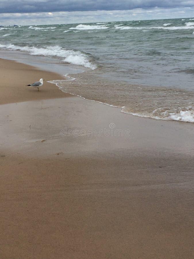 Oiseau de plage photos stock