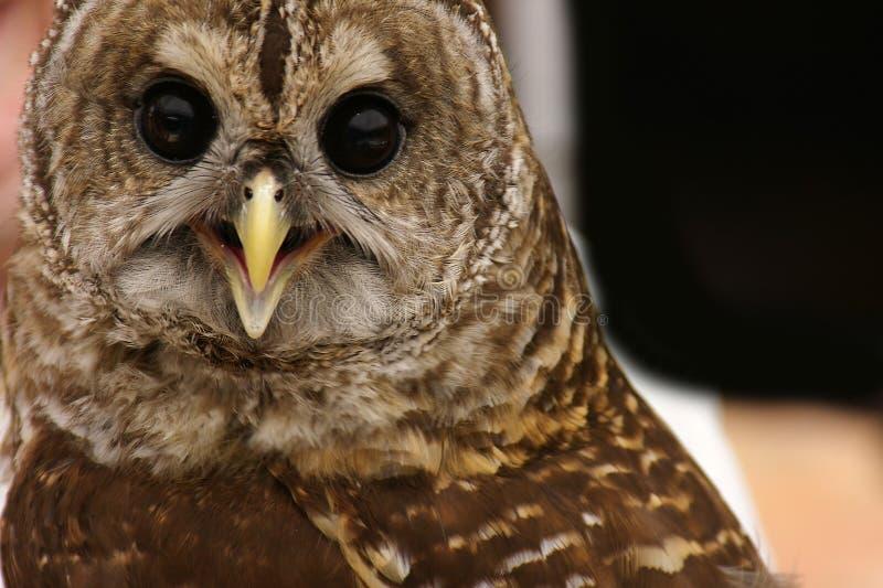 Download Oiseau de proie photo stock. Image du hibou, mouche, attaque - 728180