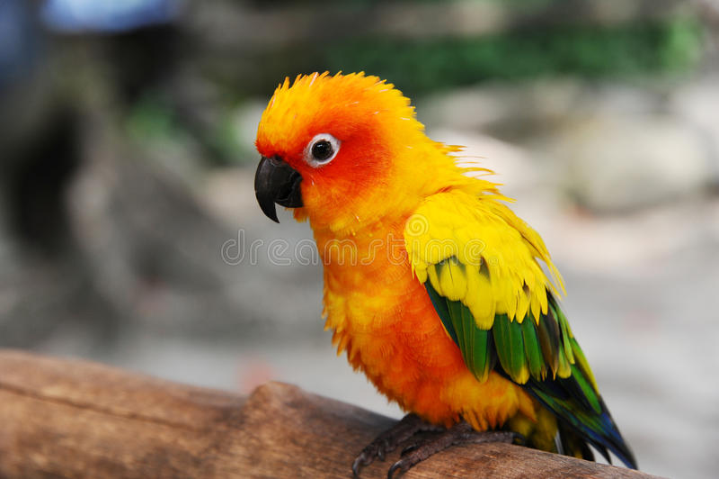 Oiseau de Robin photographie stock