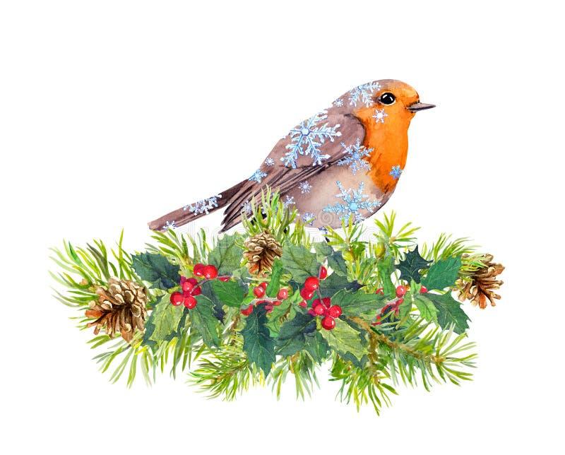 Oiseau de Robin dans des flocons de neige Branches d'arbre de Noël, gui watercolor illustration de vecteur
