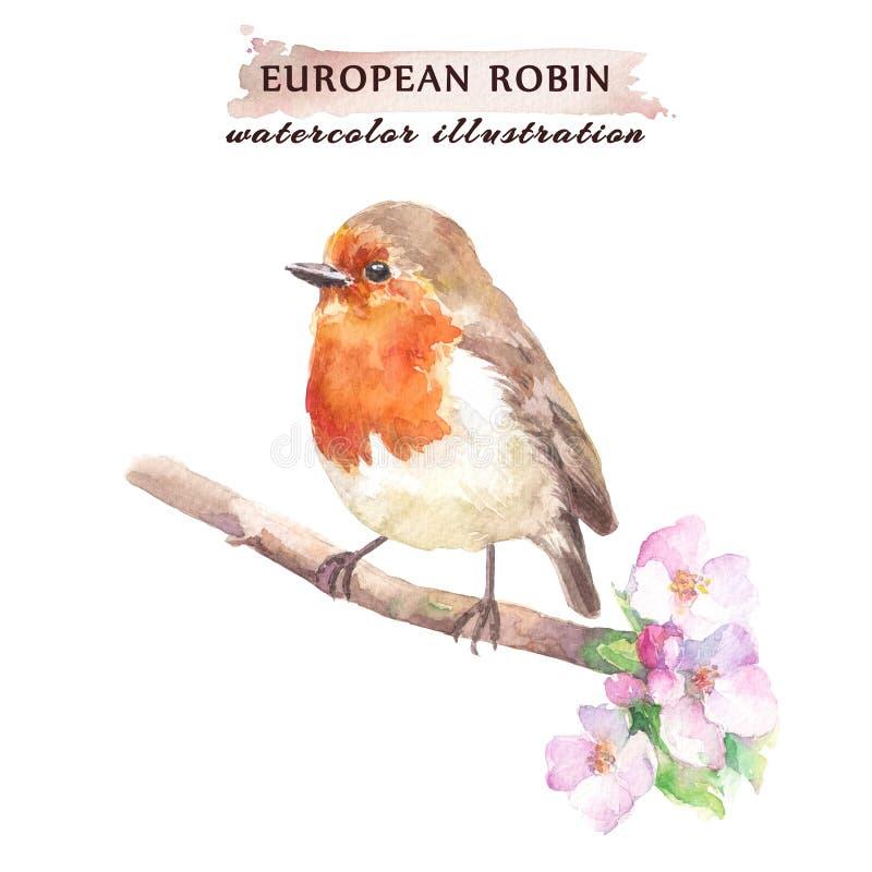 Oiseau de rouge-gorge sur la branche de fleurs de cerisier illustration de vecteur