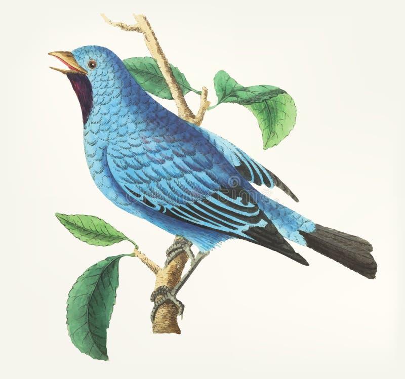 Oiseau de soie-fait varier le pas tiré par la main de bavard illustration de vecteur