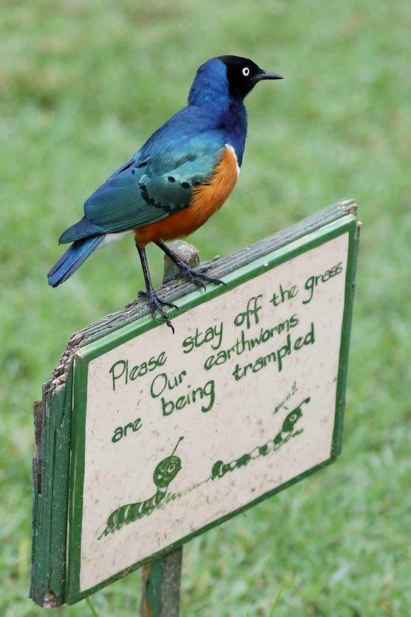 Oiseau de Starling sur le signe drôle photos stock