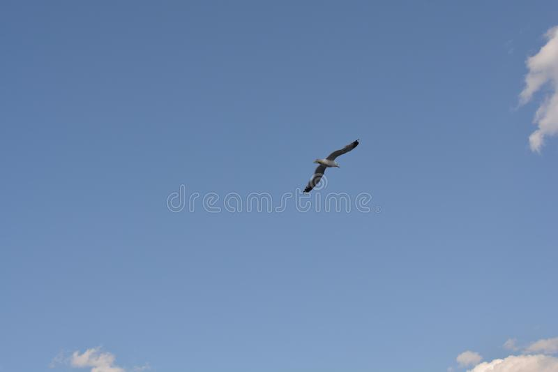Oiseau de vol photo stock