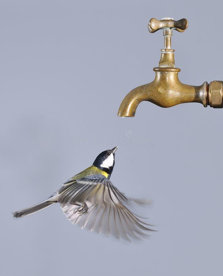 Oiseau de vol. photographie stock libre de droits