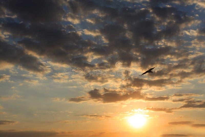 Oiseau de vol sur le coucher du soleil de ciel photographie stock libre de droits