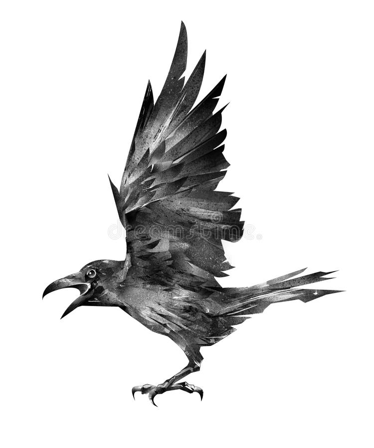Oiseau de vol tiré Raven sur un fond blanc illustration stock