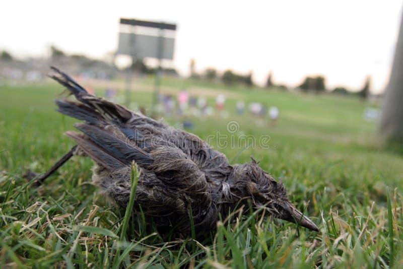 Oiseau de West Nile images libres de droits