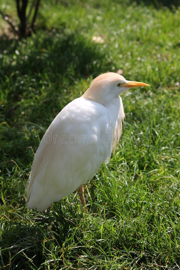Download Oiseau debout dans le zoo photo stock. Image du orange - 45351618