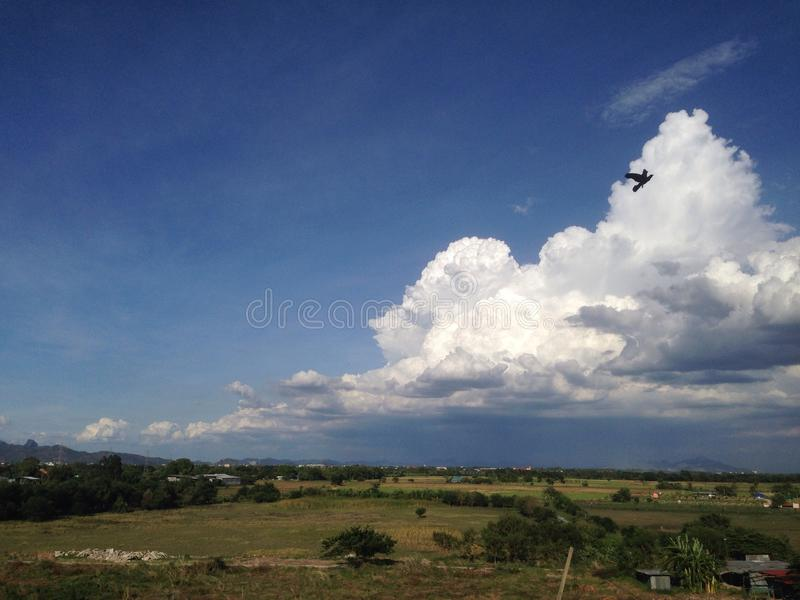 oiseau devant des nuages photo libre de droits