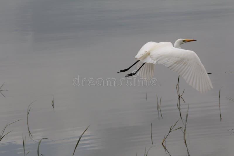 Oiseau en Ethiopie photographie stock