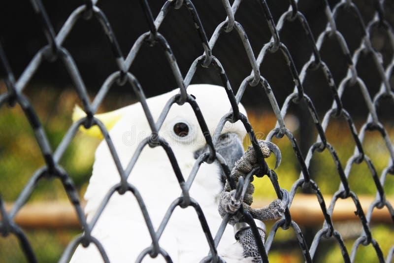 Oiseau en Thaïlande images libres de droits