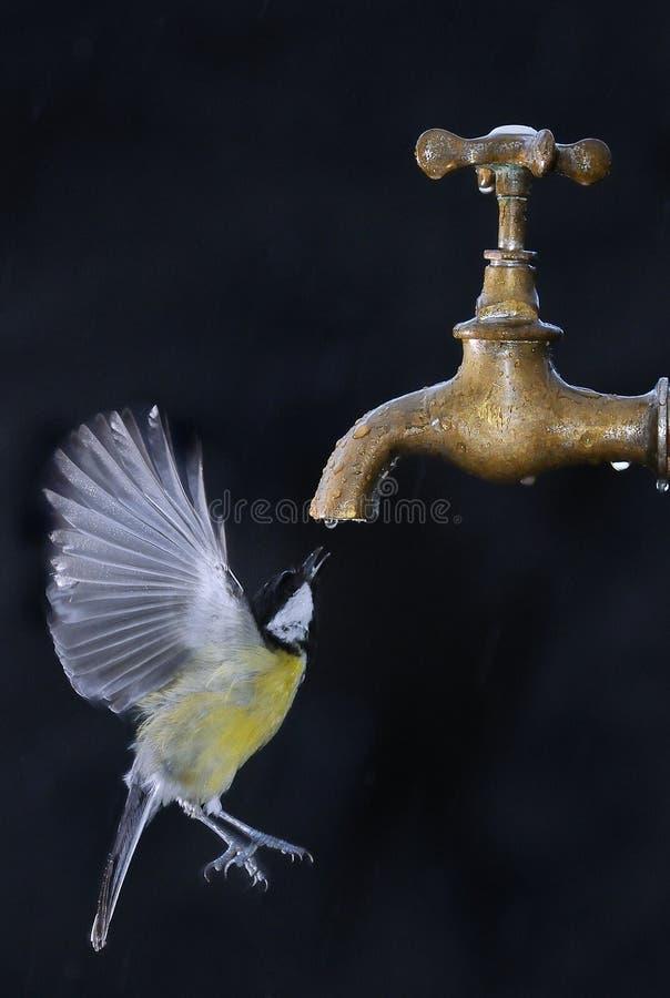 Oiseau en vol. photo libre de droits