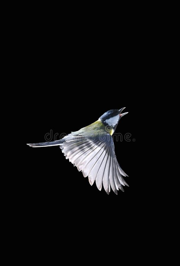 Oiseau en vol. images libres de droits