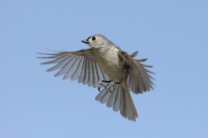 Oiseau en vol photos libres de droits