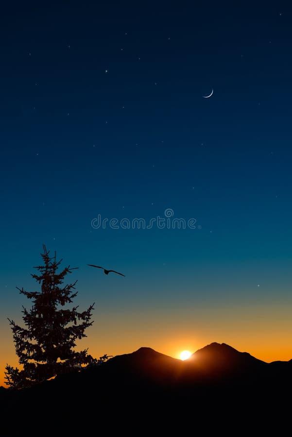Oiseau en vol au coucher du soleil image libre de droits