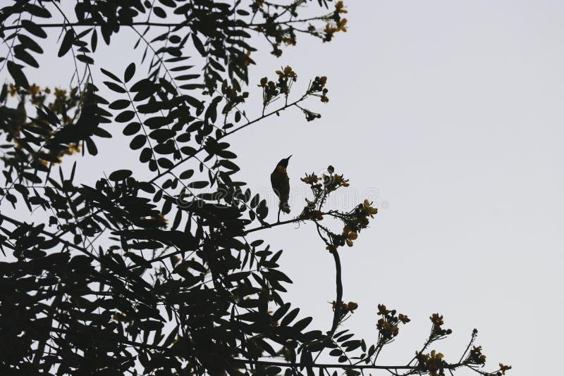 Oiseau et arbre et ciel image libre de droits