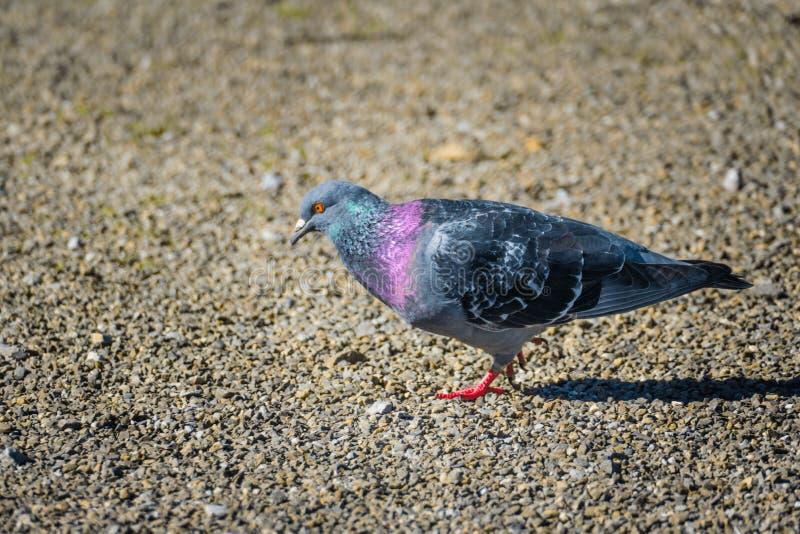 Oiseau et nourriture photographie stock libre de droits