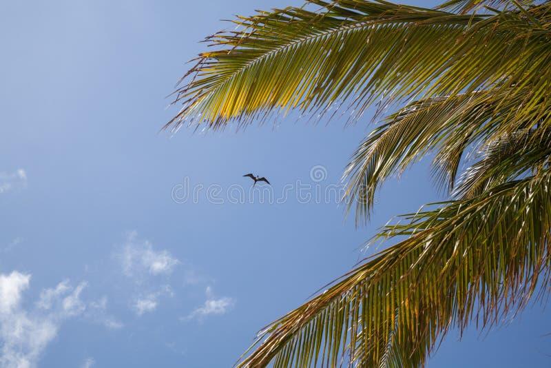 Oiseau et paumes photo libre de droits