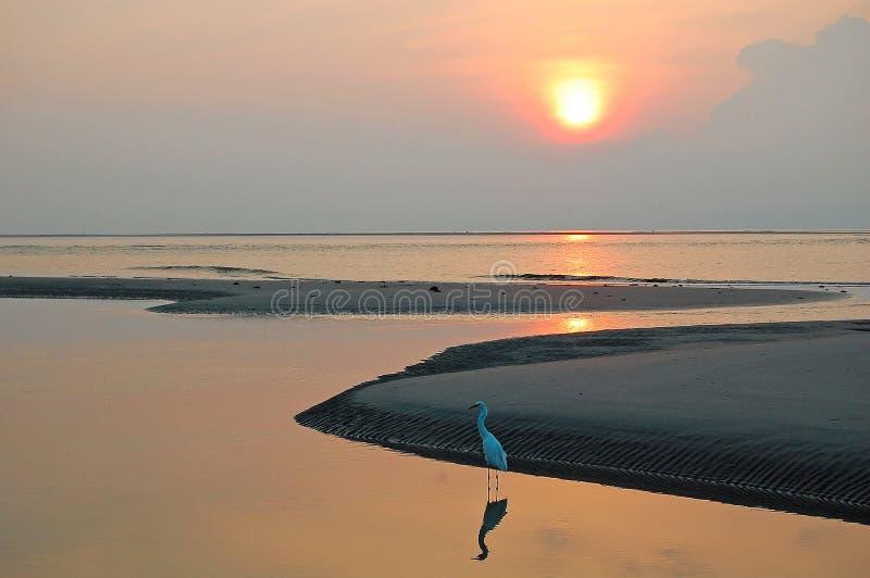 Oiseau et réflexion de rivage sur l'océan images libres de droits