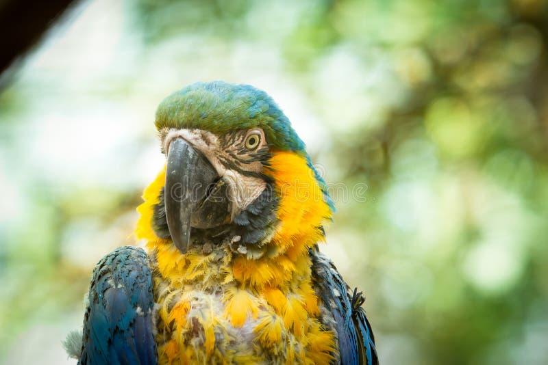 oiseau exotique qui a remarqué la cruauté animale photographie stock libre de droits