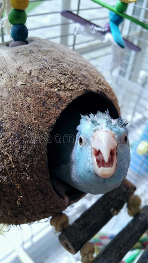 Oiseau idiot de tortue de noix de coco images libres de droits