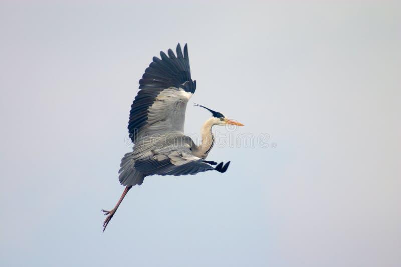 Oiseau libre dans un ciel photographie stock libre de droits