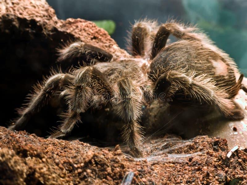 Oiseau mangeant l'araignée images stock