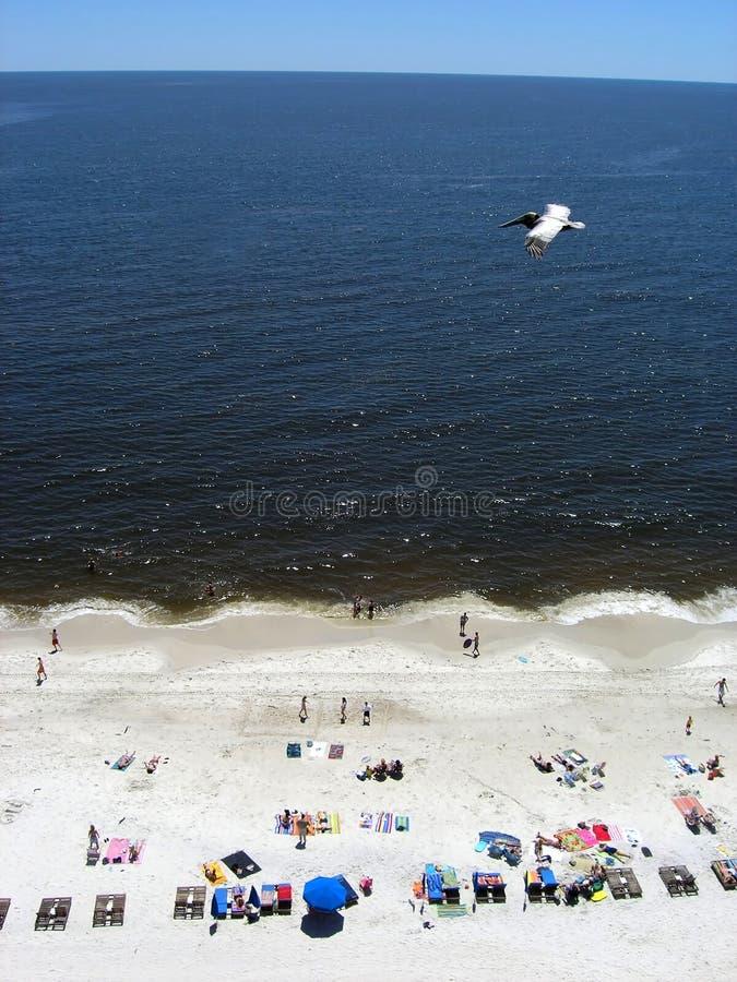 Oiseau marin montant au-dessus de la plage photographie stock