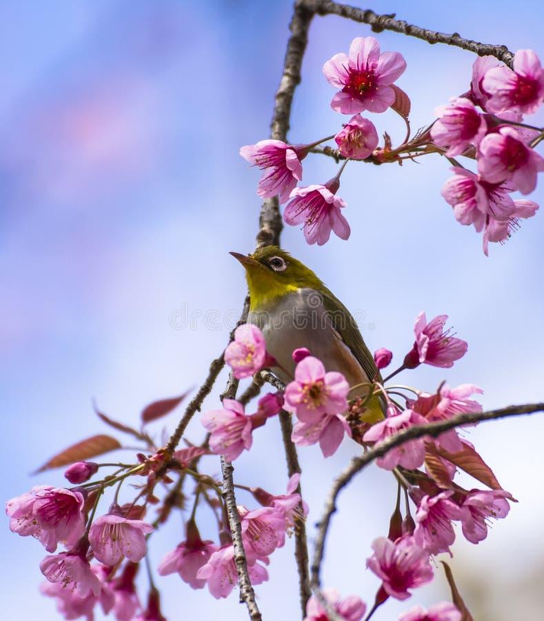 oiseau mignon se reposant sur la branche d 39 arbre de fleur photo stock image du bleu arbre. Black Bedroom Furniture Sets. Home Design Ideas