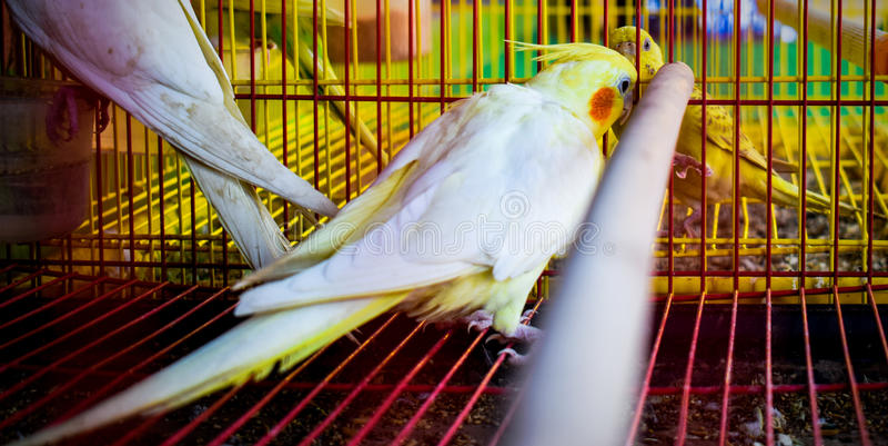 Oiseau mis en cage images libres de droits