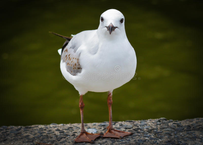 Oiseau modèle photos libres de droits