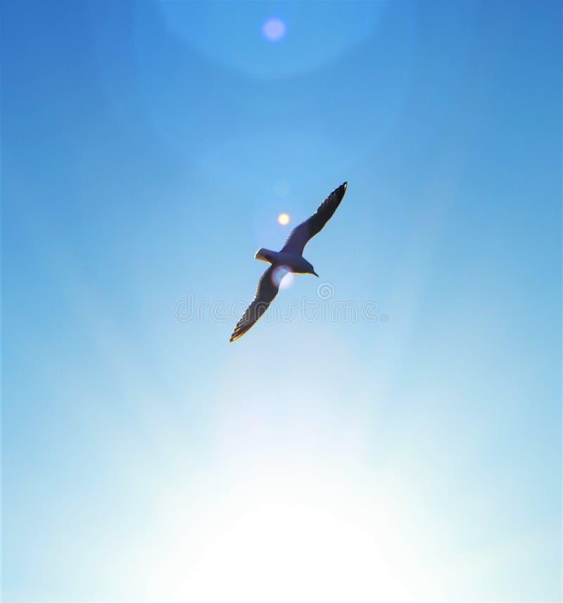 Oiseau montant photographie stock