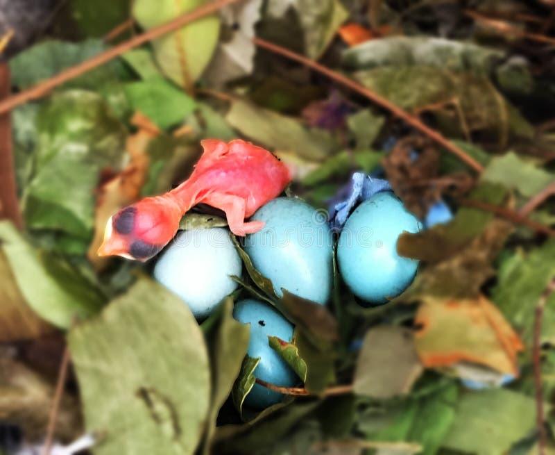 Oiseau ; naissance ; soutenu ; nid ; bébé photo stock