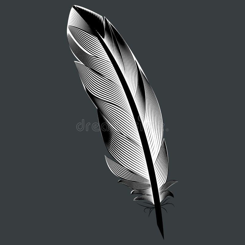 Oiseau noir et blanc de plume D'isolement image libre de droits