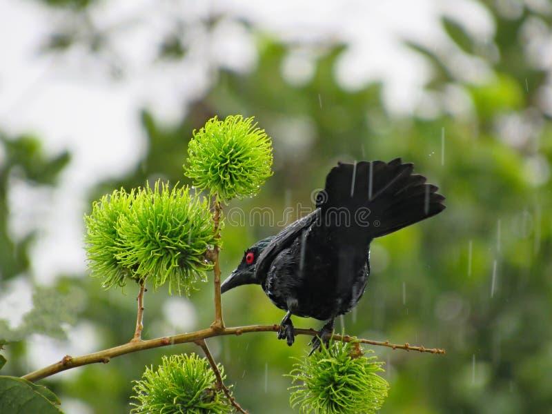 Oiseau noir sous la pluie