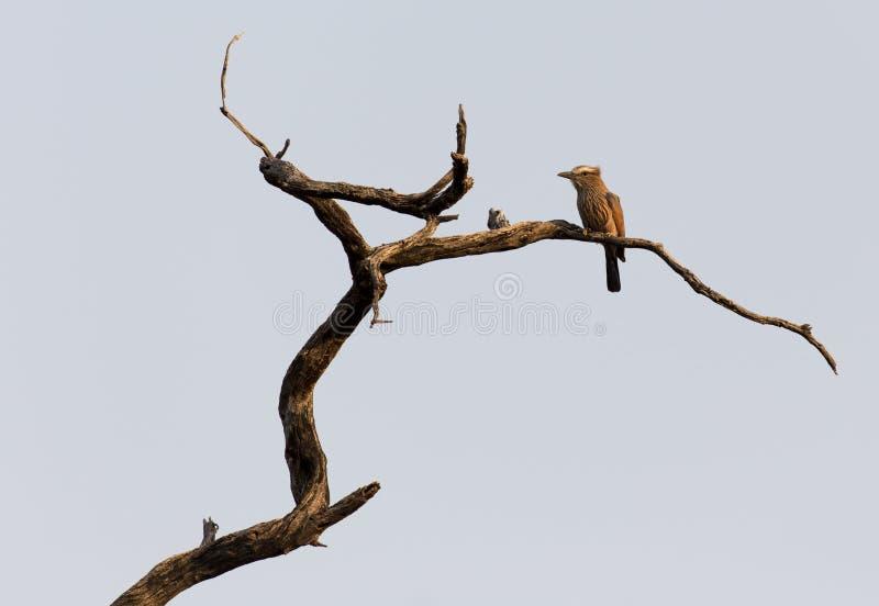 Oiseau non identifié sur un arbre photos stock
